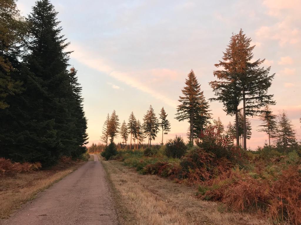 Les couleurs de la nature en automne